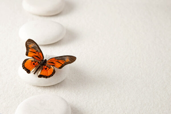 red butterfly on white sand and bebbles to symbolise balance and harmony